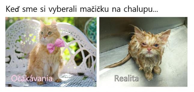 mačička PiS
